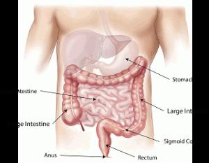 Nascent Iodine digestive system