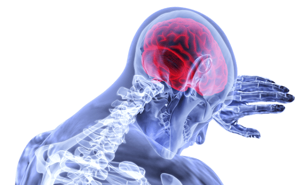 ALCAR Carnatine brain